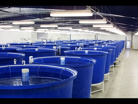 Pea1 the future of clean green fish farming could be for Indoor fish farming