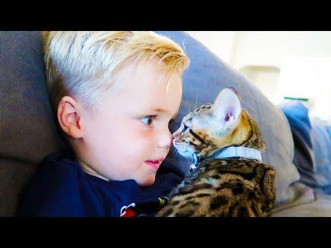 ADORABLE KITTEN KISSES