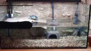 teknős akvaterrrium 250 l turtle tank 250 l