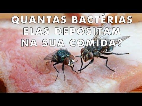Isso é o que acontece quando uma mosca pousa na sua comida