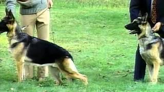 German Shepherd Dog - Akc Dog Breed Series