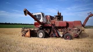 НИВА СК-5, жнива Пшениці озимої