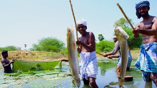 Fish Catching and Cooking   Viral Meen Kulambu   Snakehead Murrel Fish Curry Recipe   Village Food