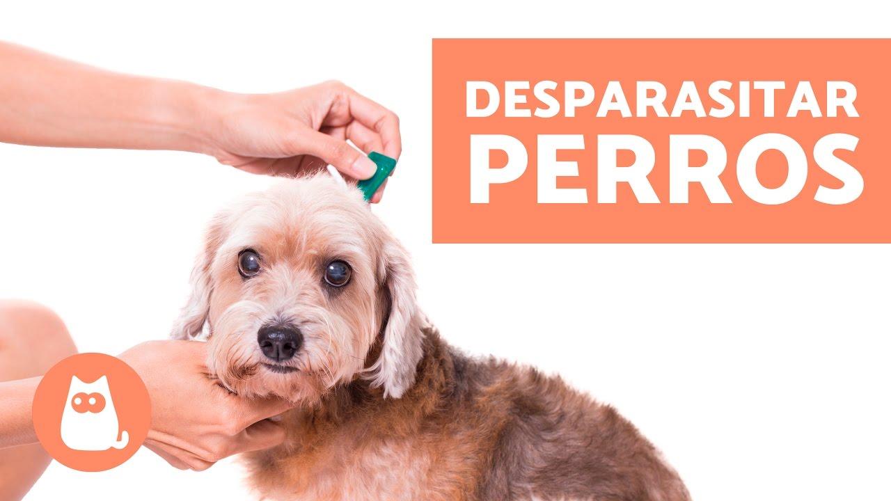cómo desparasitar un perro con metronidazol