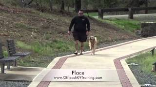 Ginger's Amazing Before/after Video! Boarding And Training In Northern Virginia!