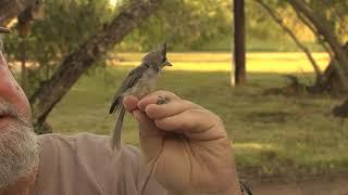 Bird Banding Milestones