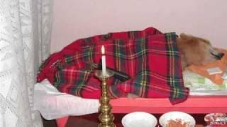 ポメラニアンのアラシが12月1日に亡くなった。16歳であったが私の宝...