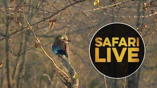 safariLIVE  - Sunrise Safari - July 14, 2018 thumbnail