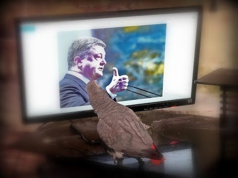 О, Петро🤗 Попугай жако Петруня наговорила лишнего😱
