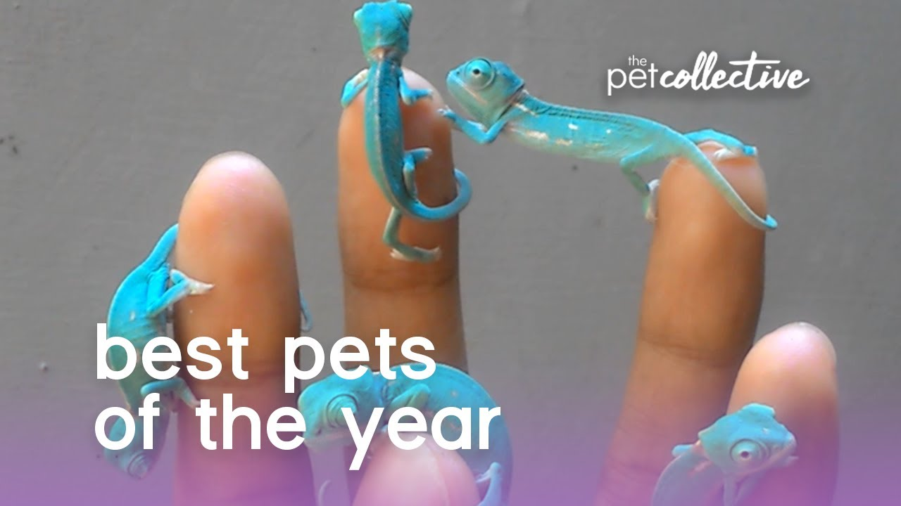 Best Pet Videos of the Year 2017!