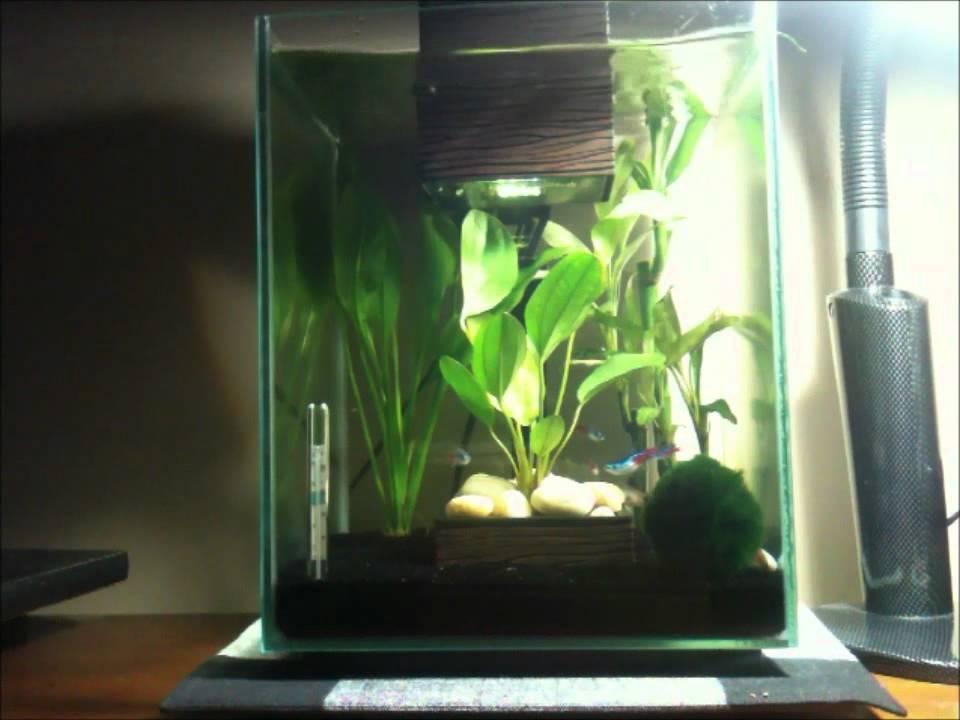 Fluval Chi 5 Gallon Aquarium   *Platinum Halfmoon Betta and Neon Tetra