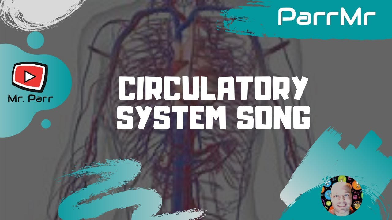 hight resolution of Human circulatory system   TheSchoolRun