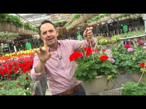 Insider tips for buying plants at a garden centre