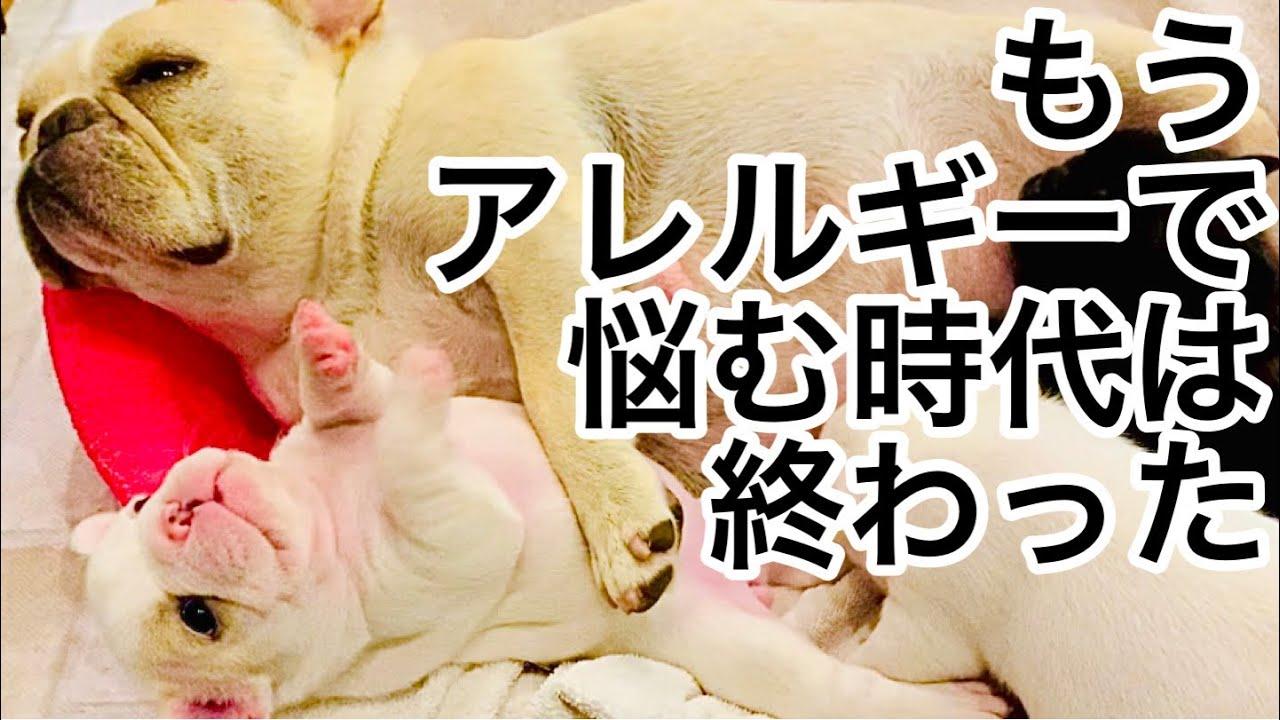 【目からウロコ】ドッグブリーダーが教える驚きのアレルギー治療法