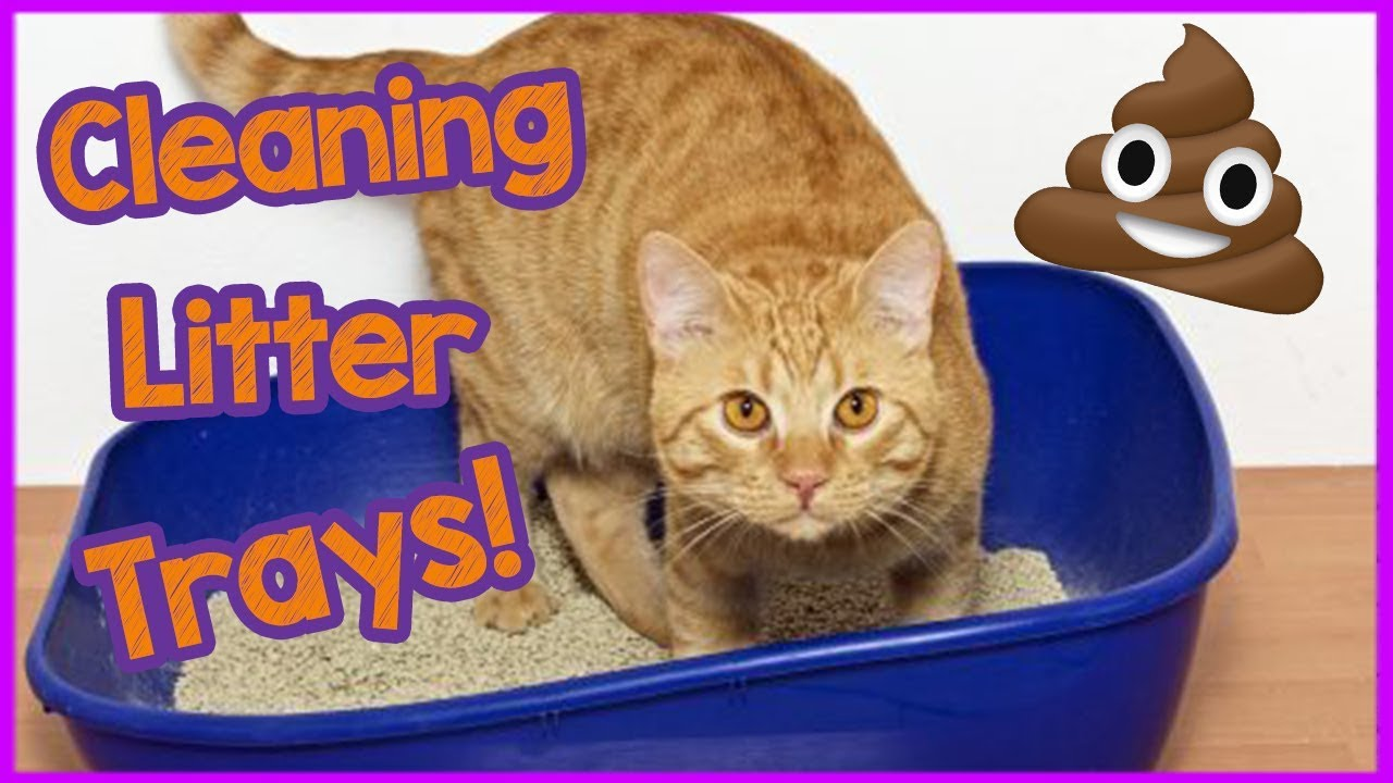 How to properly clean a cat litter tray? - The easy way to clean a litter  box!