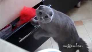 Cat Gets Caught Stealing From A Drawer