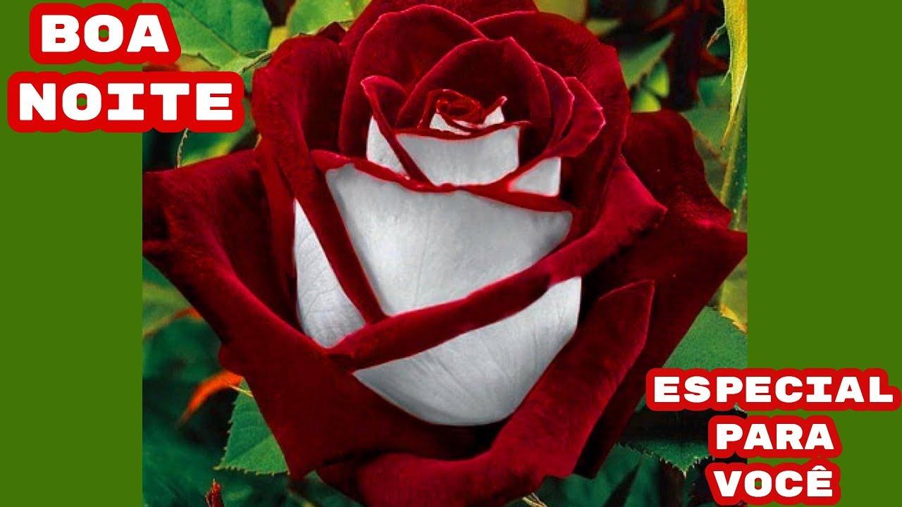 Boa Noite Especial: LINDA MENSAGEM DE BOA NOITE!!! ESPECIAL PARA VOCÊ