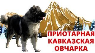 Кавказская овчарка и ее истинное предназначение