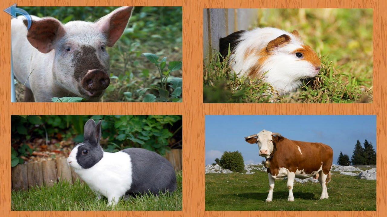 Развивающие видео для малышей - Учим названия домашних животных
