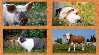 Развивающие видео для малышей - Учим названия домашних животных(В этом развивающем видео для маленьких детей мы будем учить названия домашних животных. А также мы с ребята..., 2015-05-16T10:27:52.000Z)