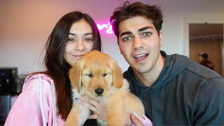 Surprising Mia With Dream Dog!!