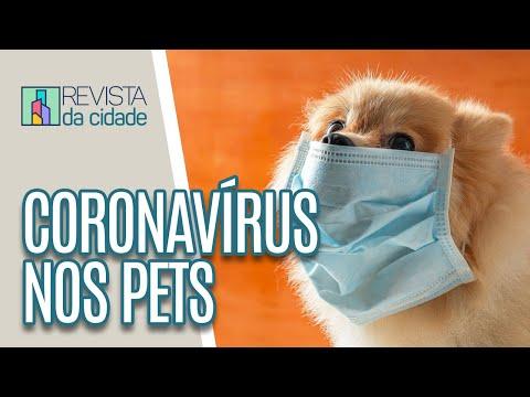 Cães E Gatos Podem Pegar Coronavírus? - Revista Da Cidade (11/03/20)