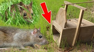 (New) Amazing Quick Mouse Box Trap Using Tree, Best Trap, Easy Make, Easy To Use, How To Create It 1