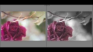 Lightroom: Урок обработка фотографий. Выделение цветом. #11