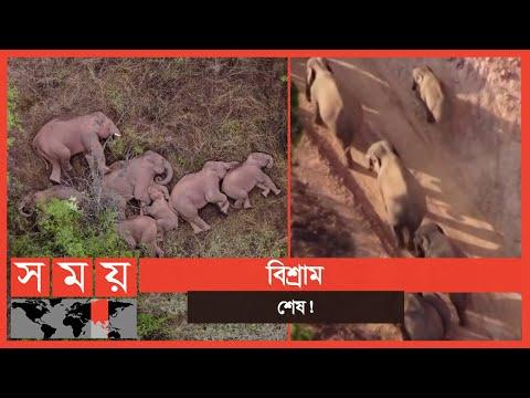 ৫০০ কিমি হেঁটে আবারও নতুন যাত্রা হাতিদের! | China's Wandering Elephants | Somoy TV