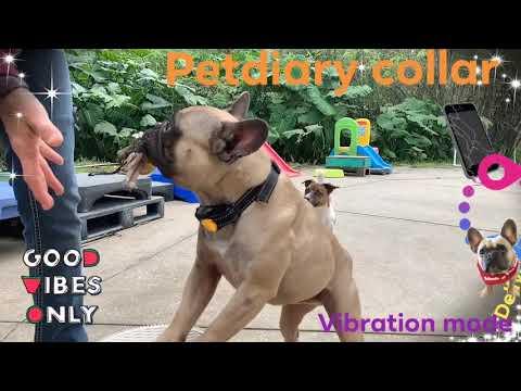 Usage of Dog Training Collar | P320 V1