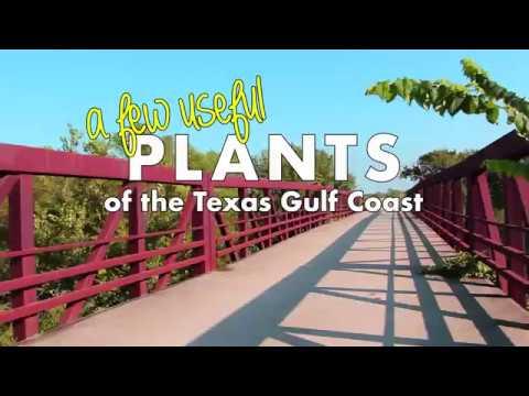 A Few Useful Plants of the Gulf Coast