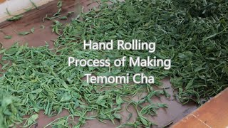 Green Tea: Japanese green tea hand rolling