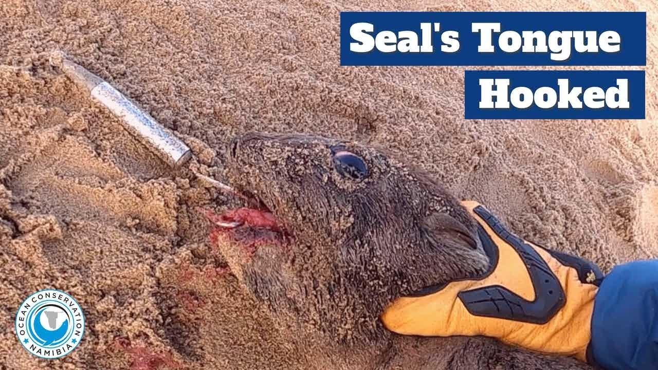 Massive Hook Stuck in Seal's Tongue!