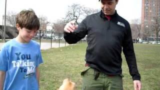 A Pigball game of fetch Thumbnail