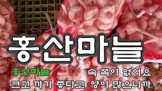 홍산마늘 종자 추천