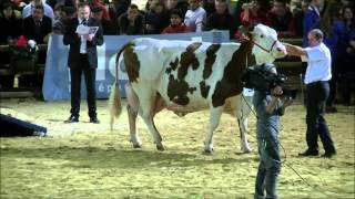 Salon International de l'Agriculture 2013 Concours Bovins