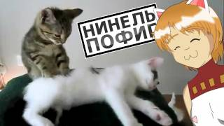 Нинель Пофиг - Кошаки ваще Котята :3