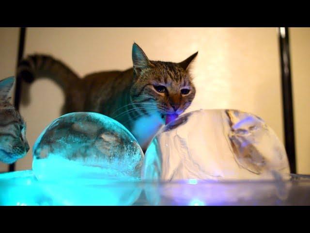 丸い氷と猫たち