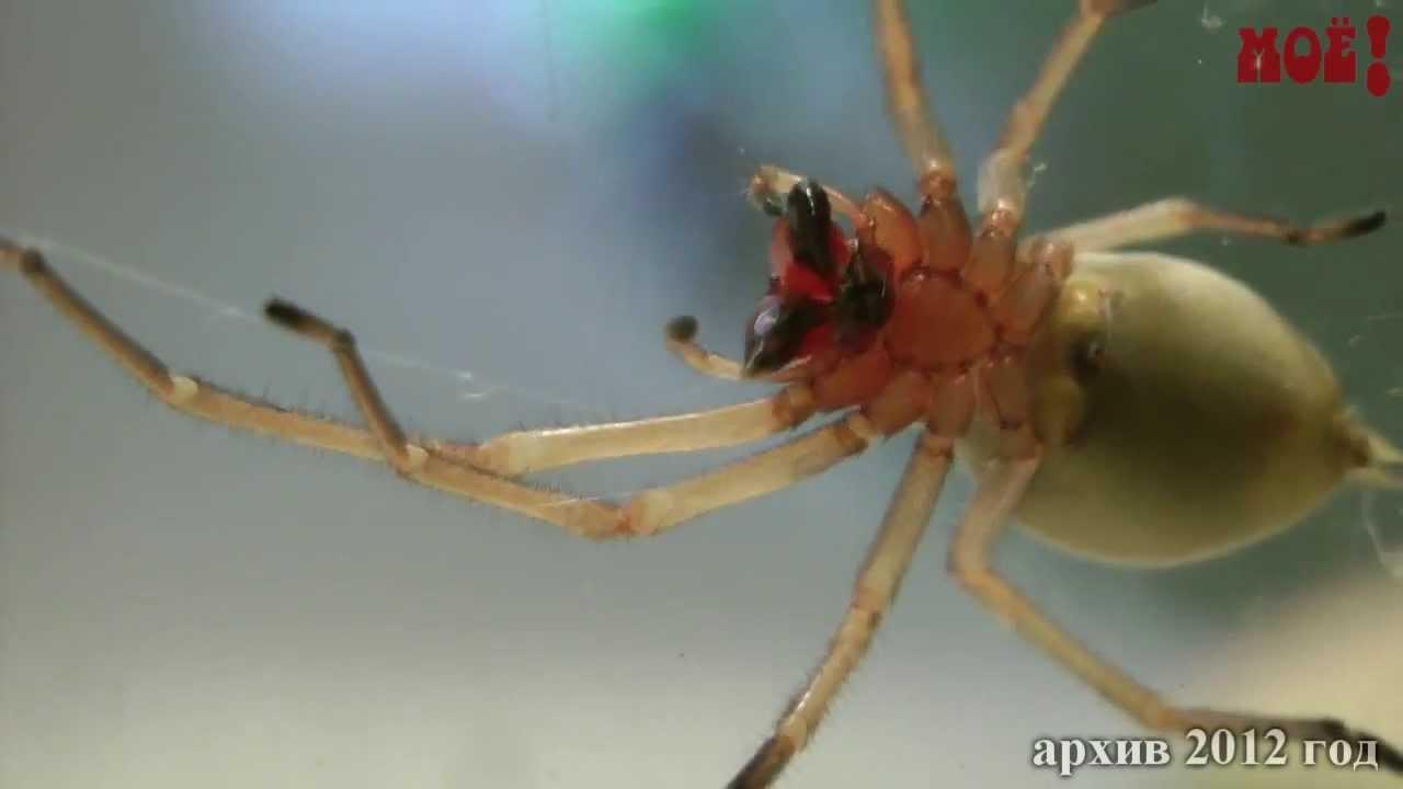 Ядовитые пауки пришли в Воронеж - YouTube