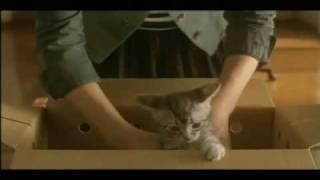 허밍어반 스테레오-소피마르소 ( ft. 허밍걸, 요조 ) 『구구는 고양이다...