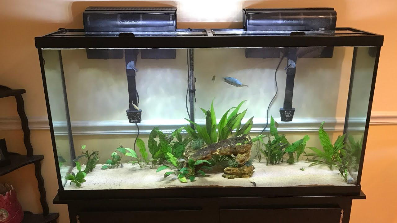 PetSmart marineland 60 gallon fish tank review - YouTube
