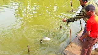 Fish Hunting | Amazing Fishing By Borshi | Big Fish | BanglaSaban