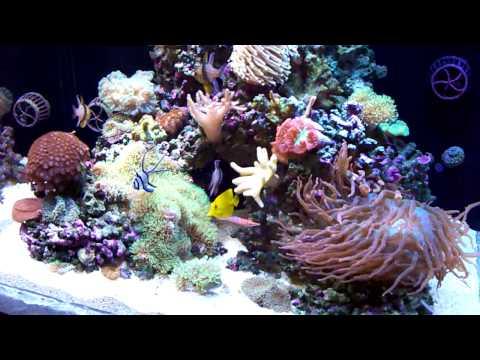 Custom Zero Edge Aquarium 3