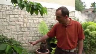 Un petit jardin tout en dénivelés - Jardineries Truffaut TV