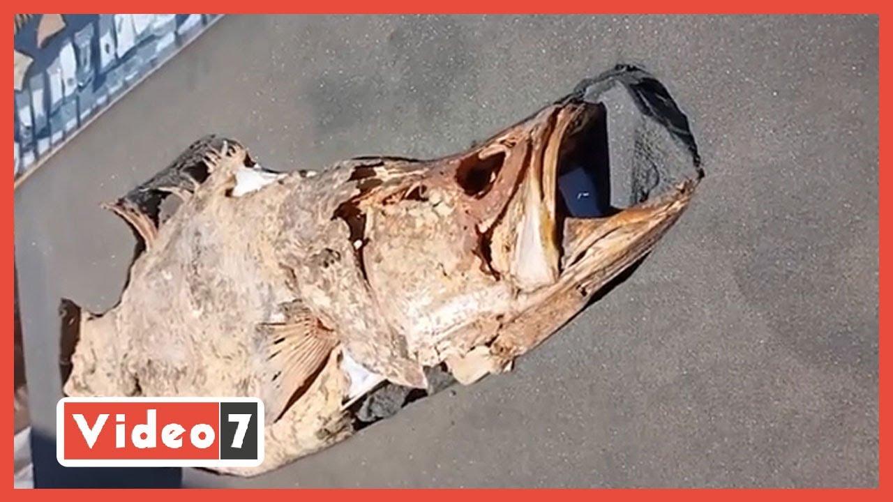 بينها السمكة الذهبية.. اعرف أبرز أسرار القطع الأثرية المكتشفة فى المدينة المفقودة  - 14:58-2021 / 4 / 10