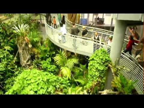 Tourist Attraction: California Academy of Science, San Francisco (HD)