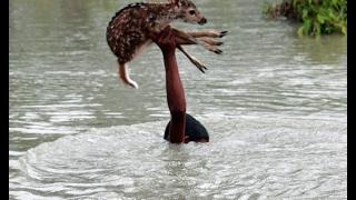 Спасение животных до слёз - До и После!