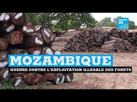 En guerre contre l'exploitation illégale des forêts au MOZAMBIQUE