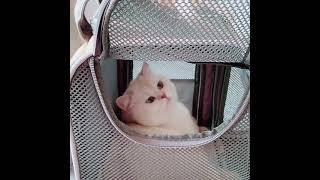 대형 강아지 접이식 자동차 카시트 고양이 이동가방