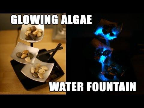 Glowing Algae Water Fountain